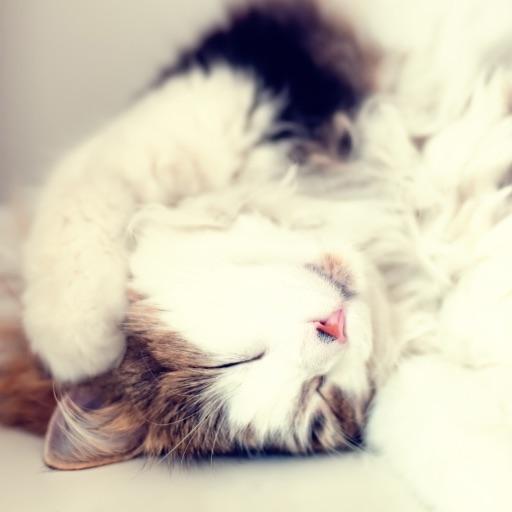 ⚽️ Kitty Capri⚽️