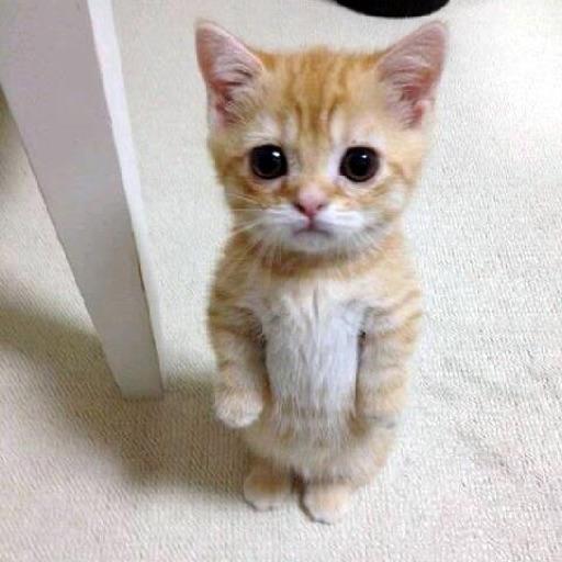 KittyKat 10
