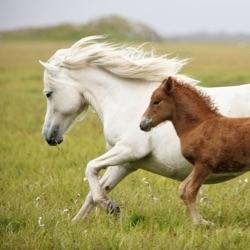 keytothehorses