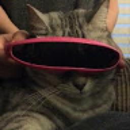 Retro_Cat_2005