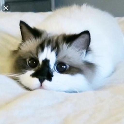 Kool Kitty