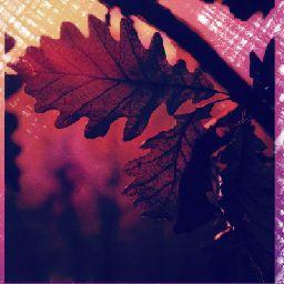 Auburn Leaf 🍂🍁🌷🐈