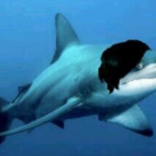 Support Emo Sharks
