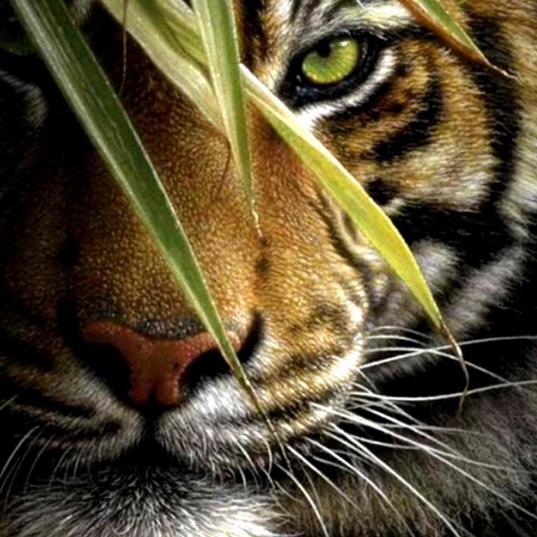 Tigerskpr 💕🐅