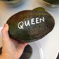 avocado queen