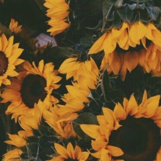 Colorfully_Crazy☺️🌻🖤