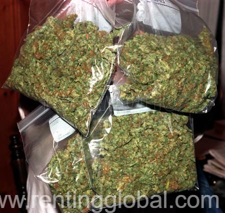 www.rentingglobal.com, renting, global, Atlanta, GA, USA, marijuana,ogkush,hermpoil,cannabis, Medical Marijuana,Cannabis oil,Moonrock,Cbd,Seeds and OG Kush available