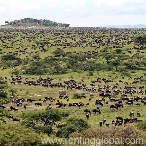 www.rentingglobal.com, renting, global, Nairobi, Kenya, wildebeest migration masai mara kenya., kenya migration safari, kenya wildebeest migration safaris.,wildebeest migration into masai mara, the great kenya wildebeest migration safari, mass migration of wildlife masai mara, wildebeest migration, yha kenya travel wildebesst migration safari  safari, wildebeest animal migration kenya., kenya adventure camping migration safari, migration safari kenya package,kenya wildebeest migration, wildebeest migration, best time to see, attraction, mass migration, kenya annual migration, kenya, yha kenya travel,  kenya migration safari,  kenya wildlife migration, animal migration, wildebeest migration into masai mara, migration watch on balloon safari, hot air balloon ride, kenya budget holidays, small group safaris, trip to masai mara, masai mara migration, kenya adventure safaris, kenya short safaris, kenya budget safaris, kenya camping safaris, migration watch in masai mara kenya, african wildebeest migration in kenya, best african safari., YHA Kenya Travel Masai Mara Great Wildebeest Migration Kenya Safari Tours.
