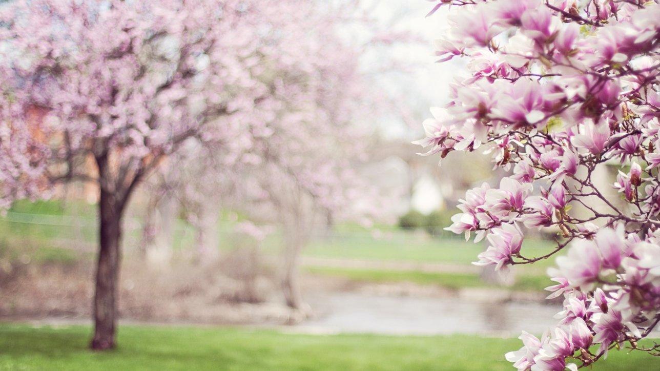 So genießen Sie den Mai noch mehr: Wir verlosen zwei Vapiano-Gutscheine!