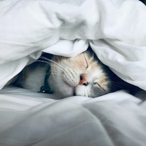 The Ultimate Calming Playlist That Sends You Straight To Sleep