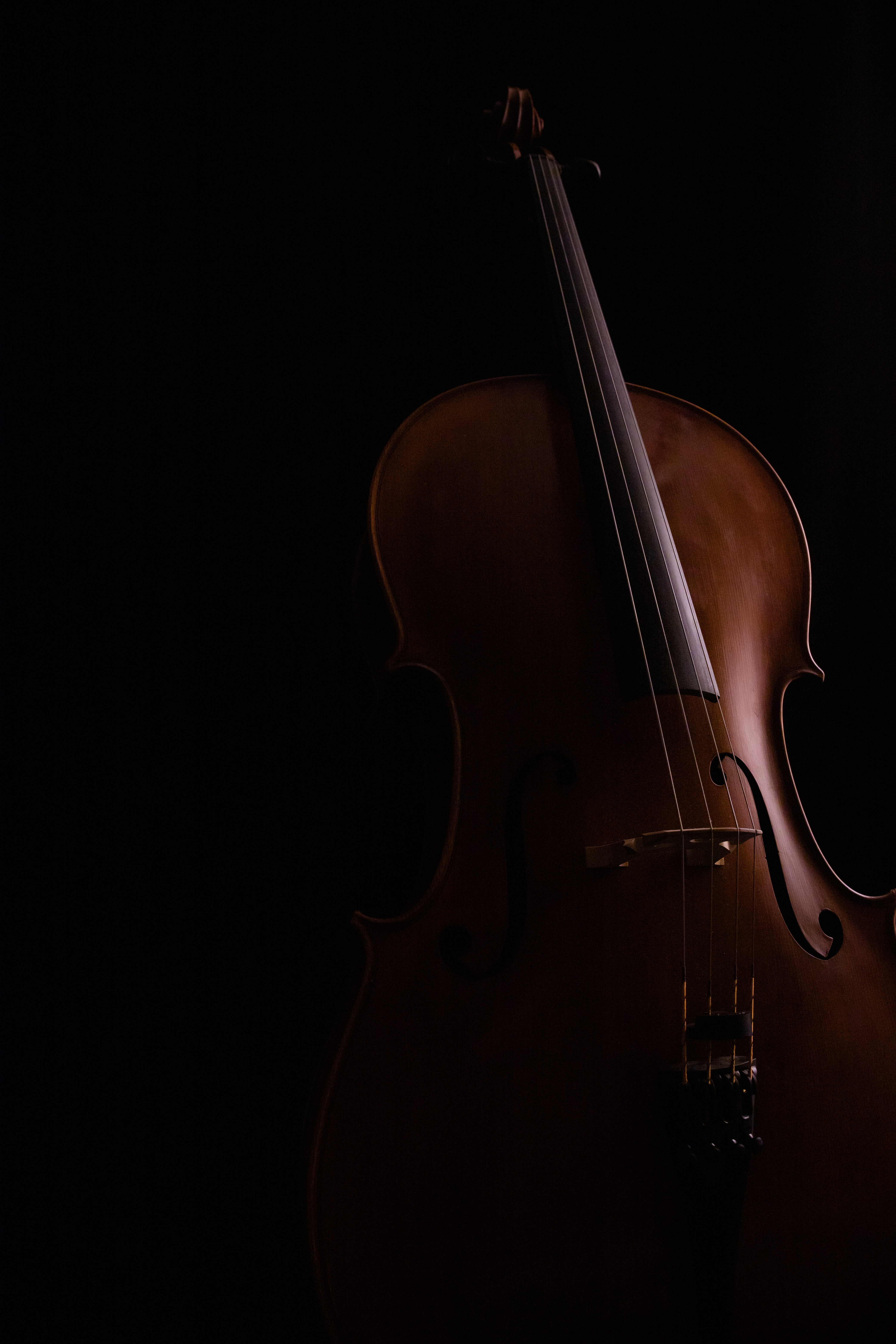 Virtual Beginner String Lessons | Violin & Viola | 23+ Years Playing Experience 3