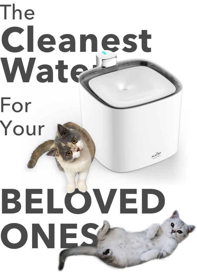 ALNPET+ | Make Your Pets Fall In Love With Drinking Water