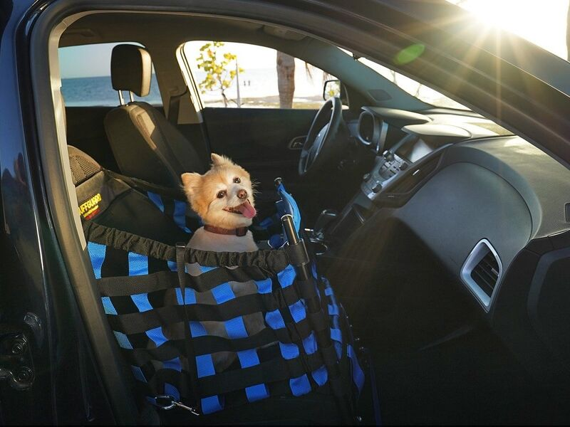 Wuffguard   A Car Seat That Could Save Your Dog's Life