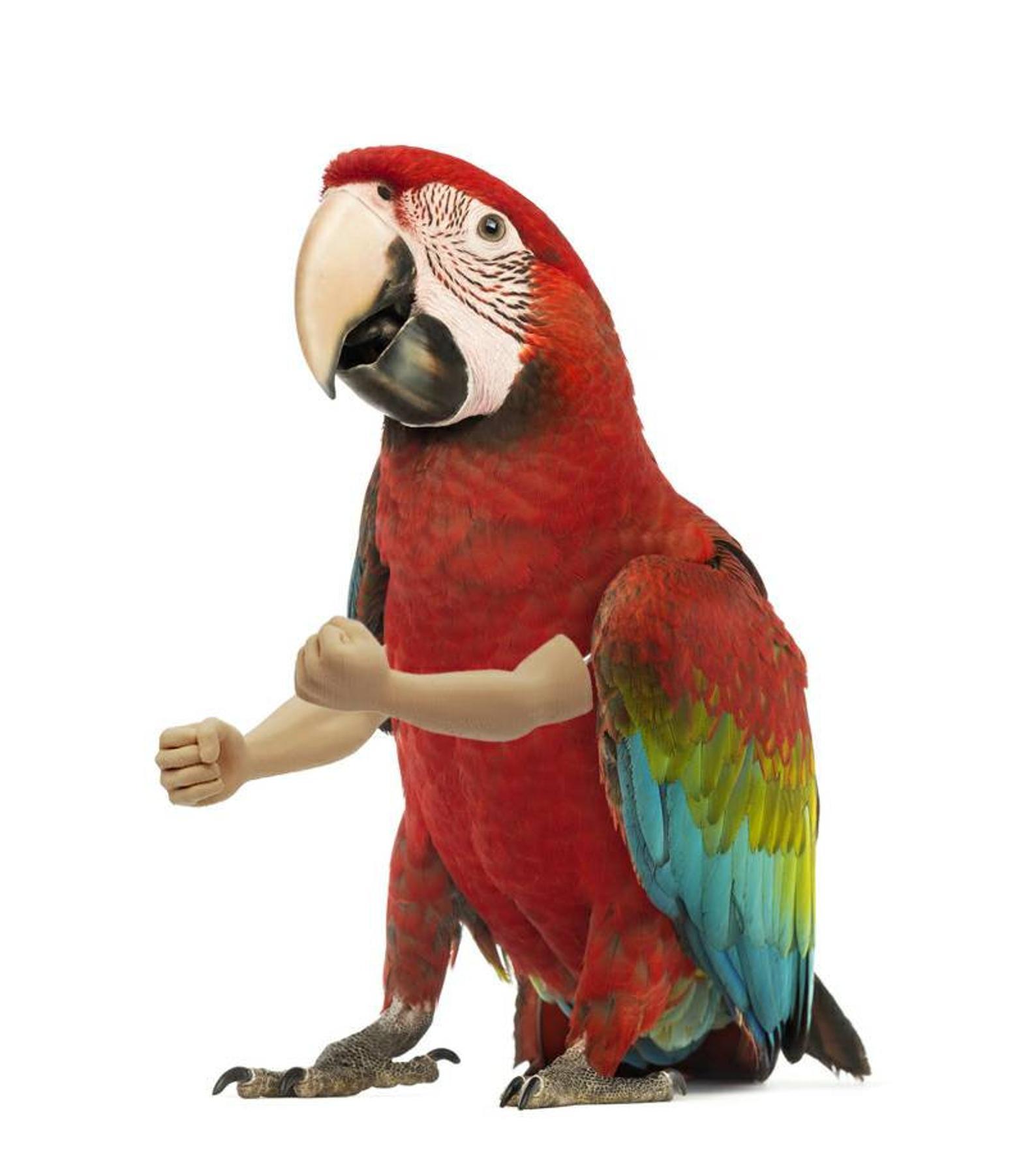 Parrot Arms