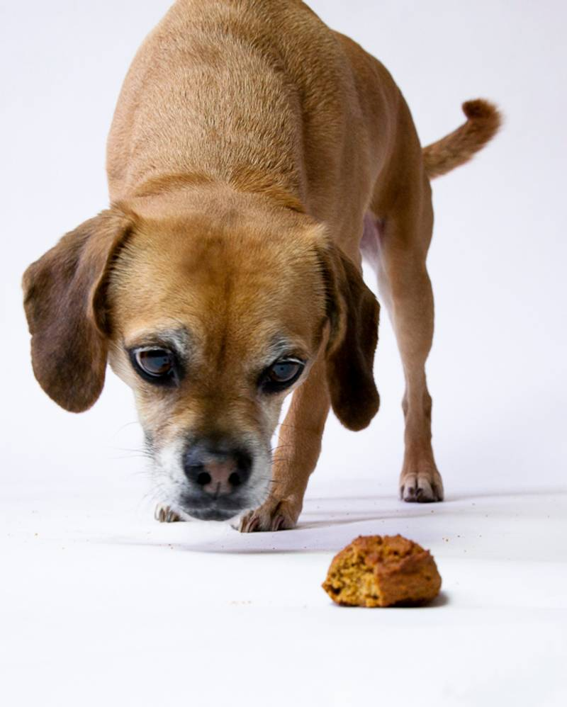 Peanut Butter Cinnamon Molasses Dog Treats