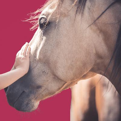 What is Horsemanship?