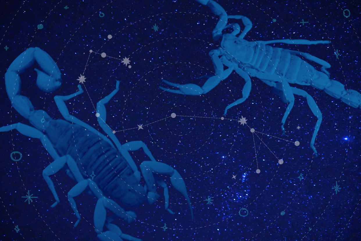 Scorpions representing the Scorpio zodiac sign in a constellation