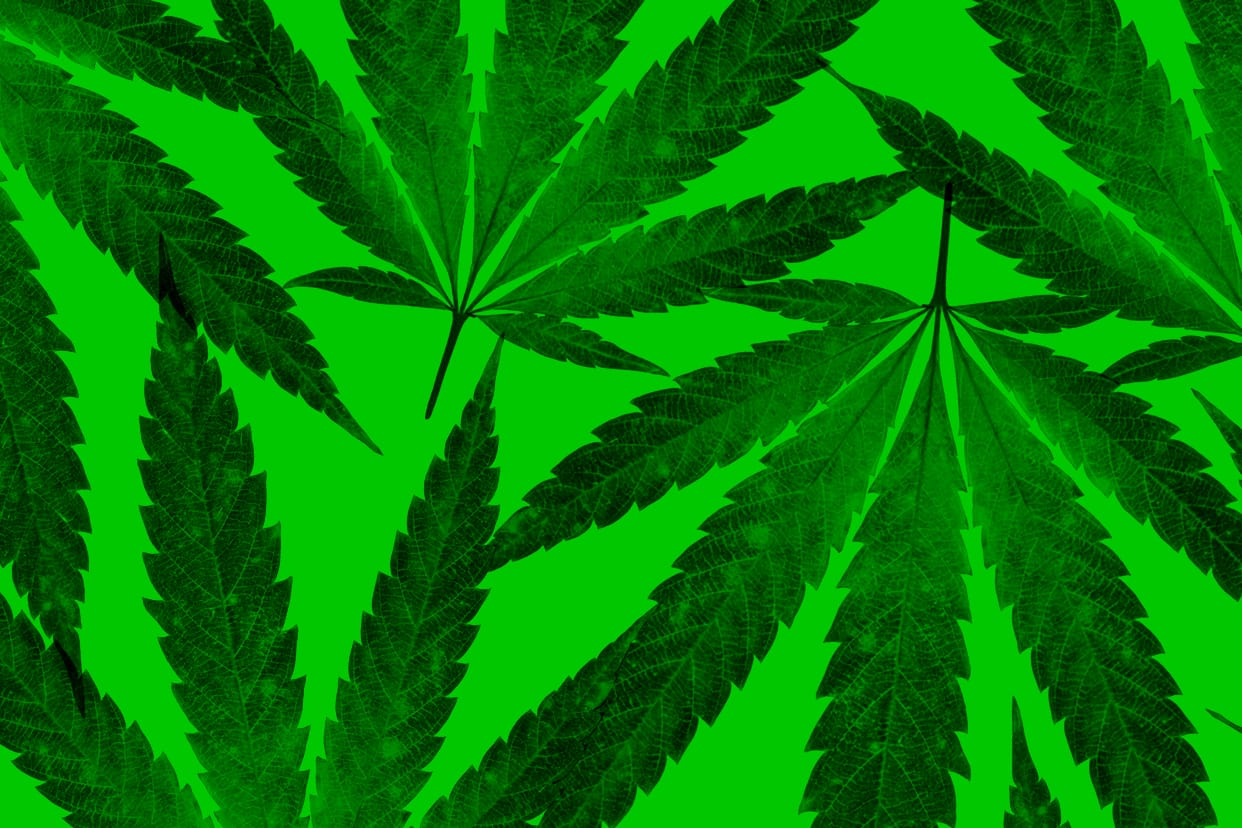 Cannabis leaves on a green background