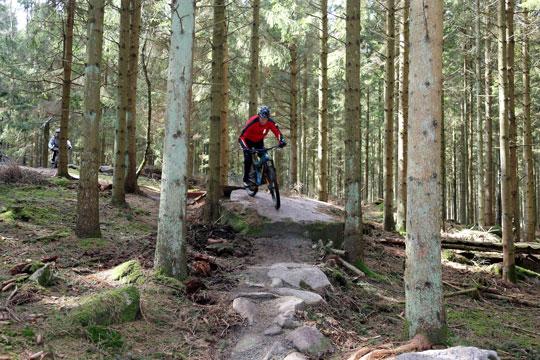 Almindingen - Downhill