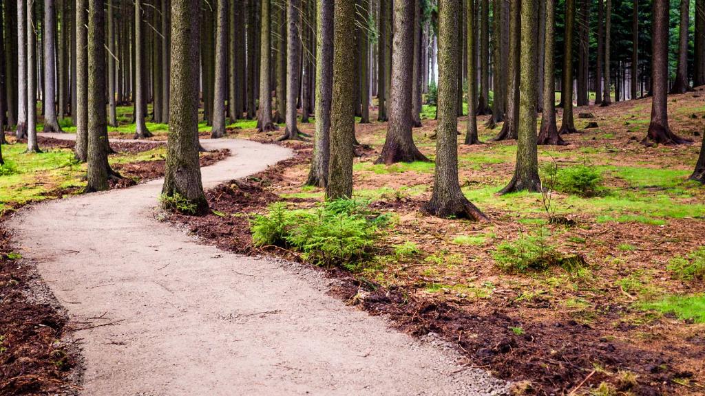 Green Handy Trail