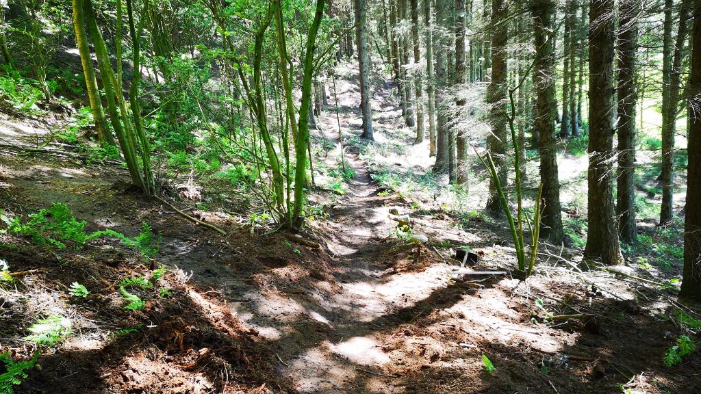 Vinstrup Bjerge MTB Spor