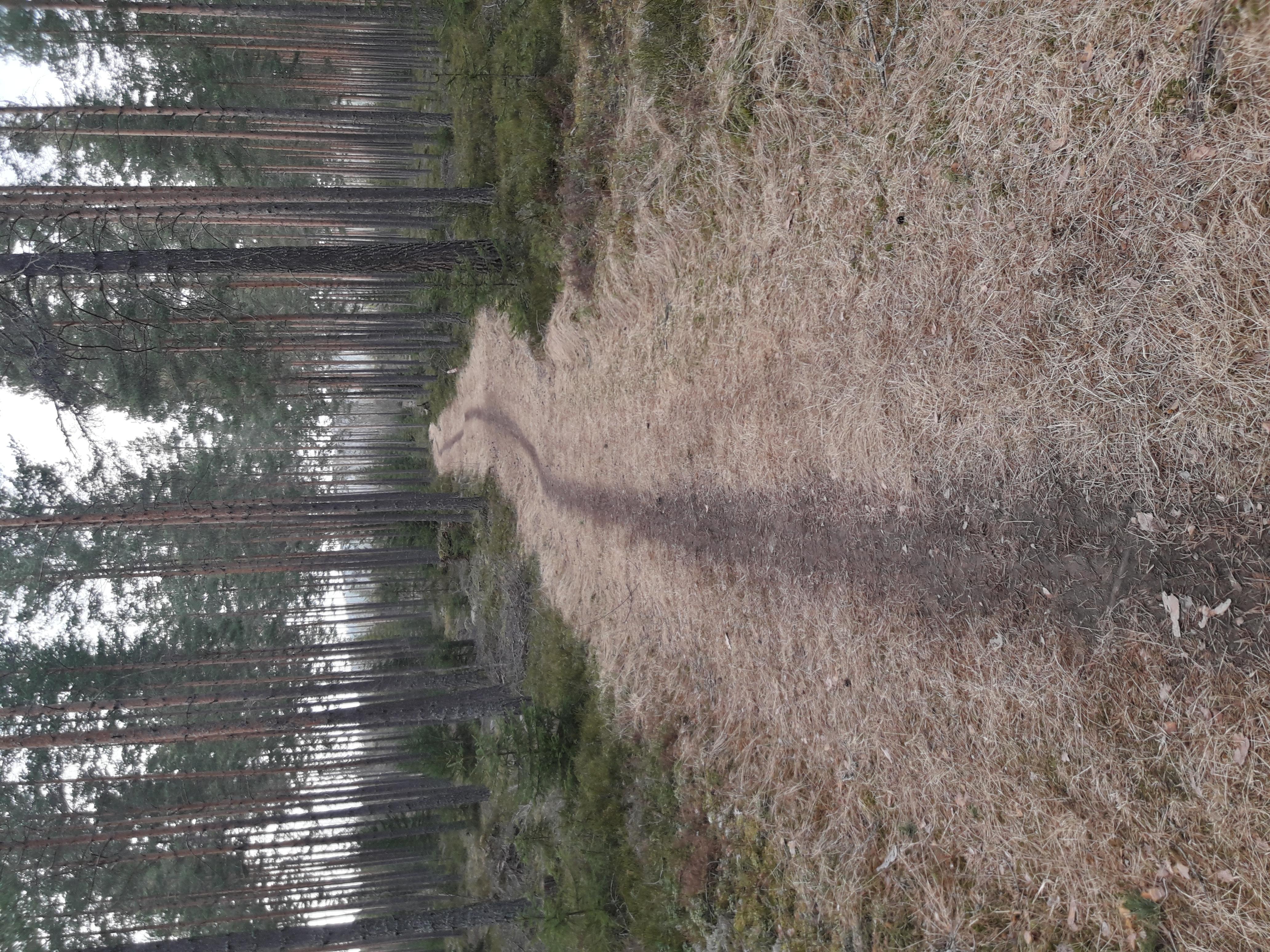 Tømmerfløtern