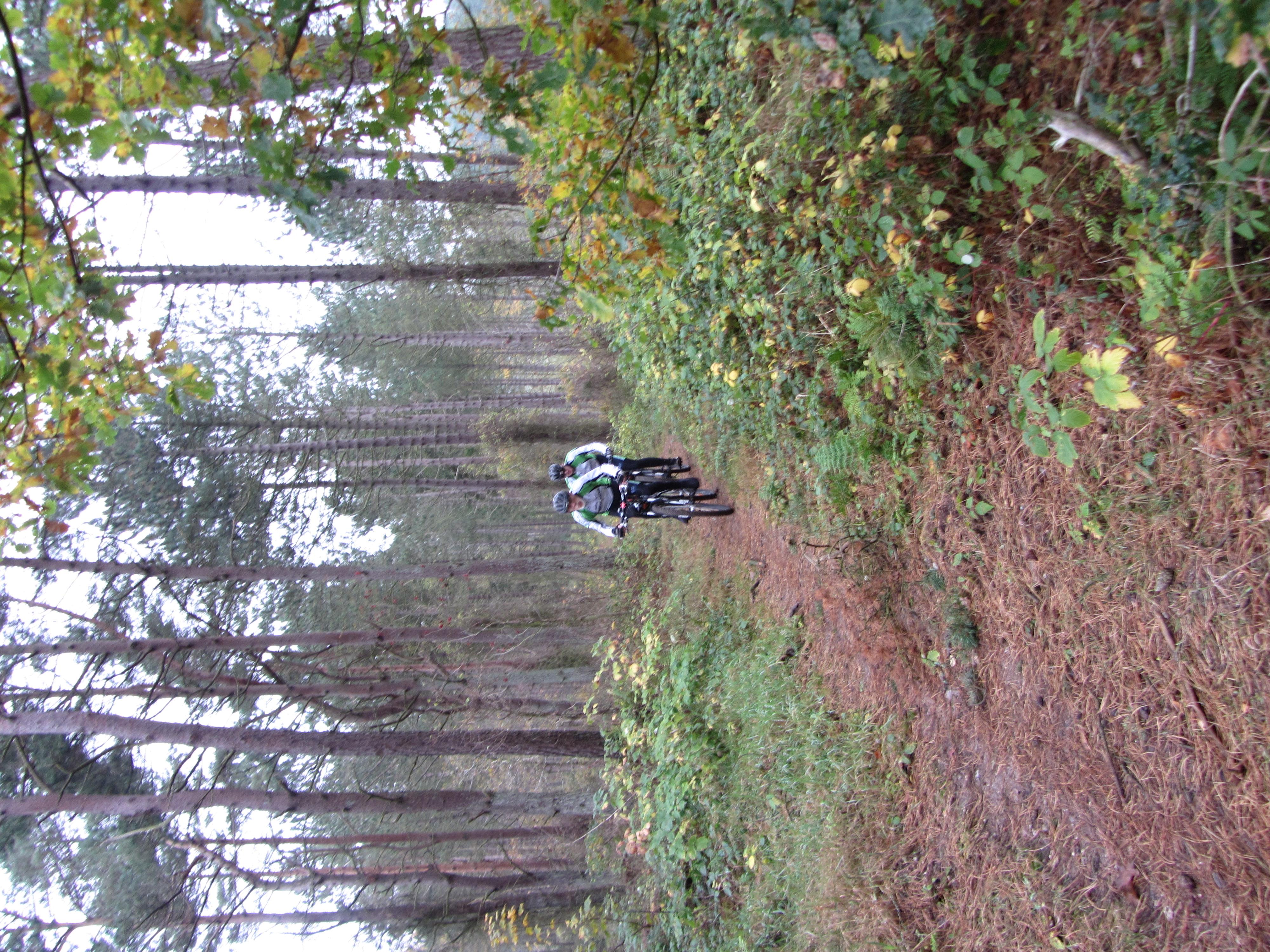 Haarby/Trunderupskoven Grønt spor