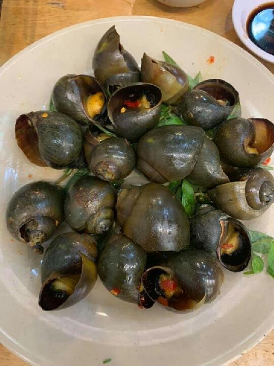 snail #vietnam