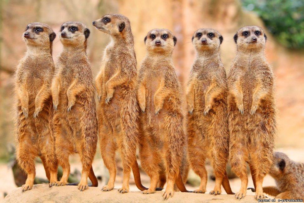 В Африке животные повсюду
