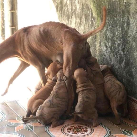 Trang trại chó phú quốcTú