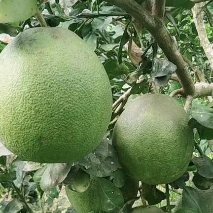 Ghế gỗ PLC