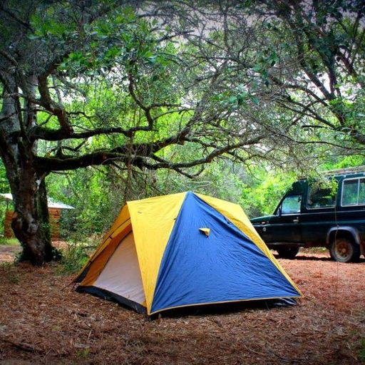 Platbos Forest & Owl Camp