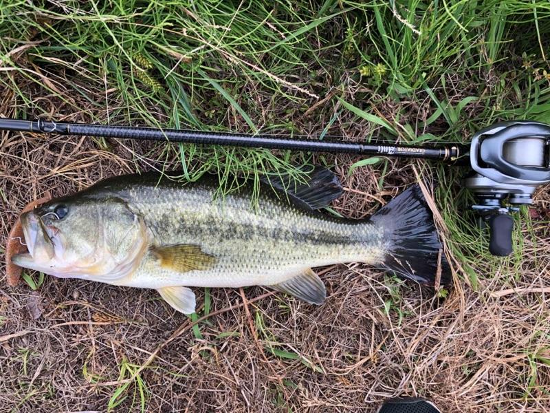 秋田市新屋野池軍2018年06月08日14:30の釣果の画像