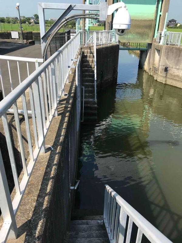 与田裏川の水門2018年06月25日08:14の釣果の画像