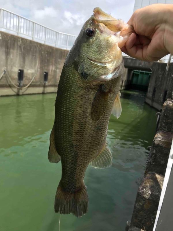 与田浦川の水門2018年07月30日10:50の釣果の画像