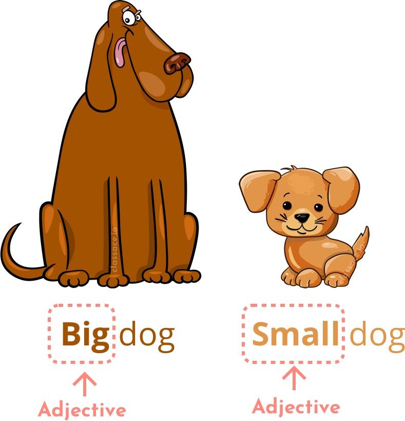 Adjectives describe nouns, like big and small.