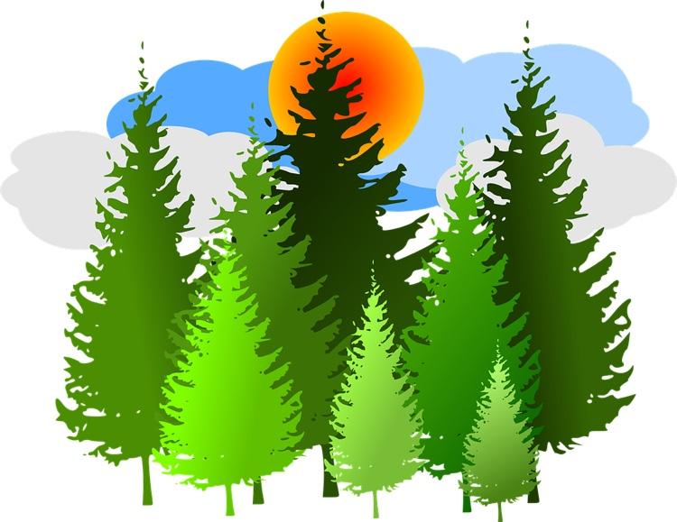 Many trees.