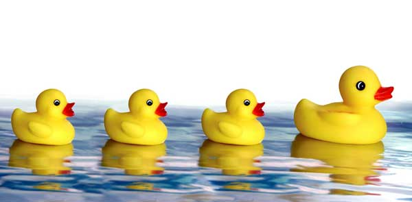 Four ducks swimming in a row in water.