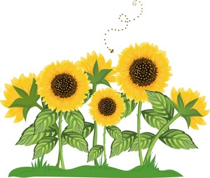 A group of sunflower plants with a bumble bee flying around..