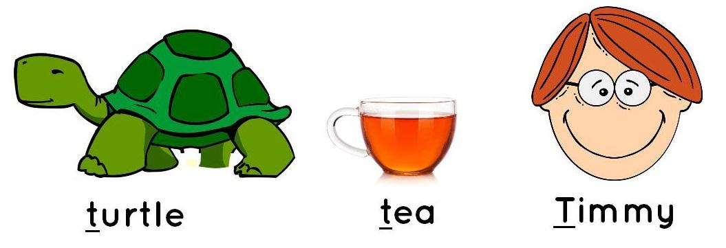 turtle, tea, Timmy