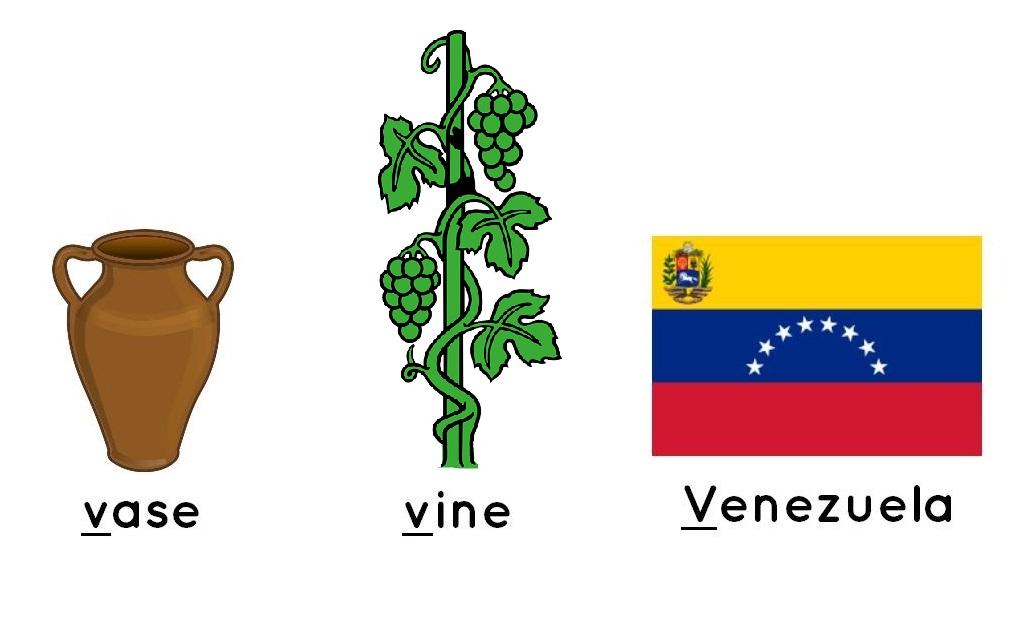 vase, vine, Venezuela