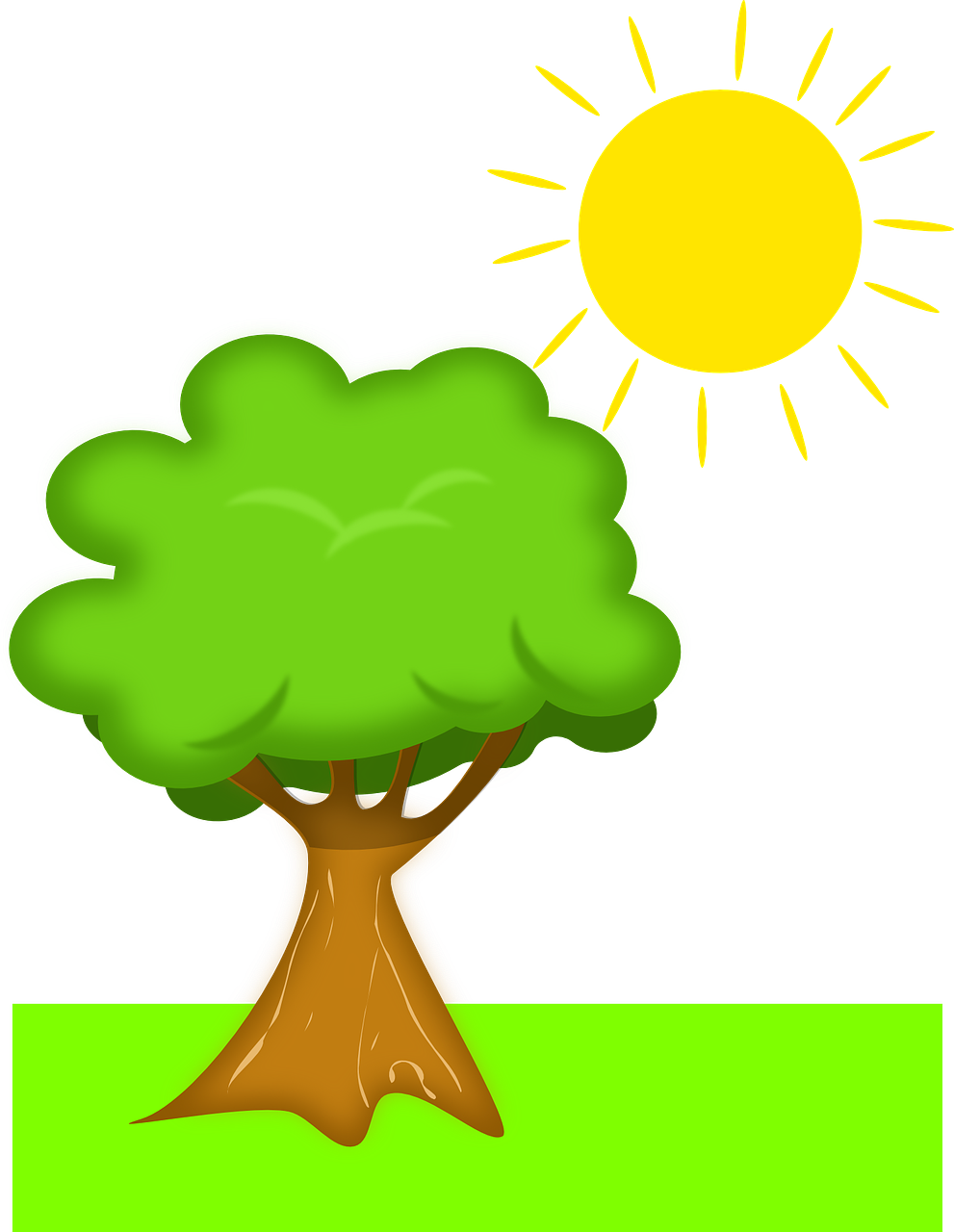 A tree under the sun.