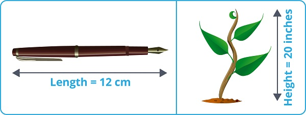 pen and plant