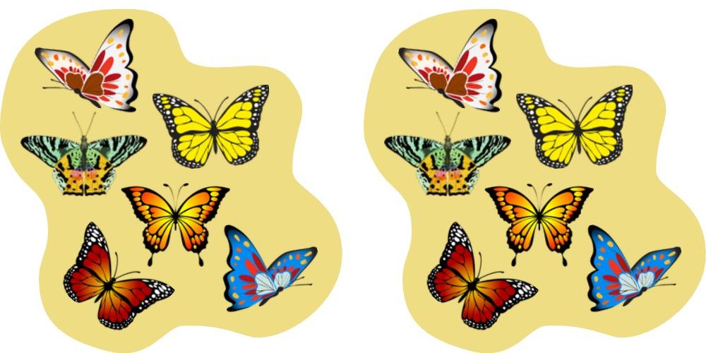 2 groups of butterflies