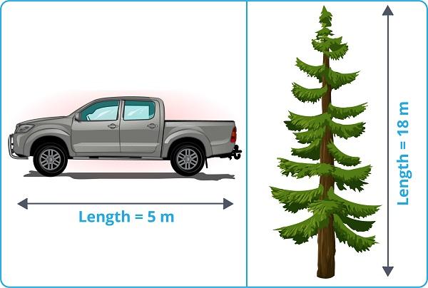 car and pine tree