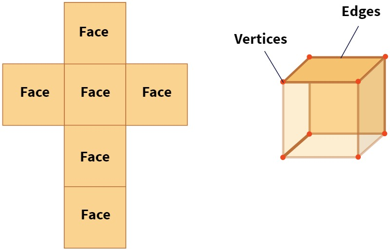 faces and vertices