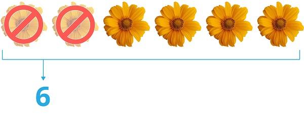 6 sunflowers