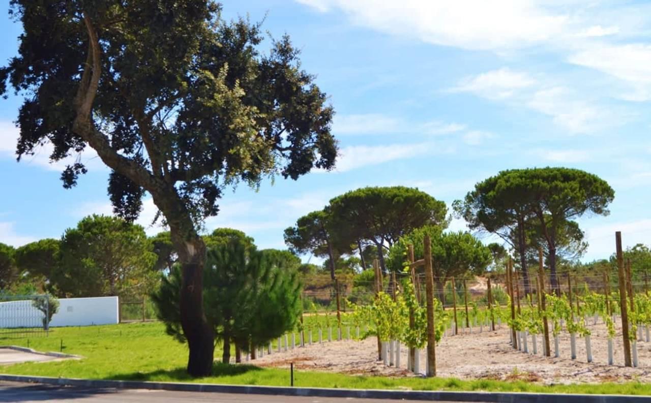 Location: Quinta do Brejinho