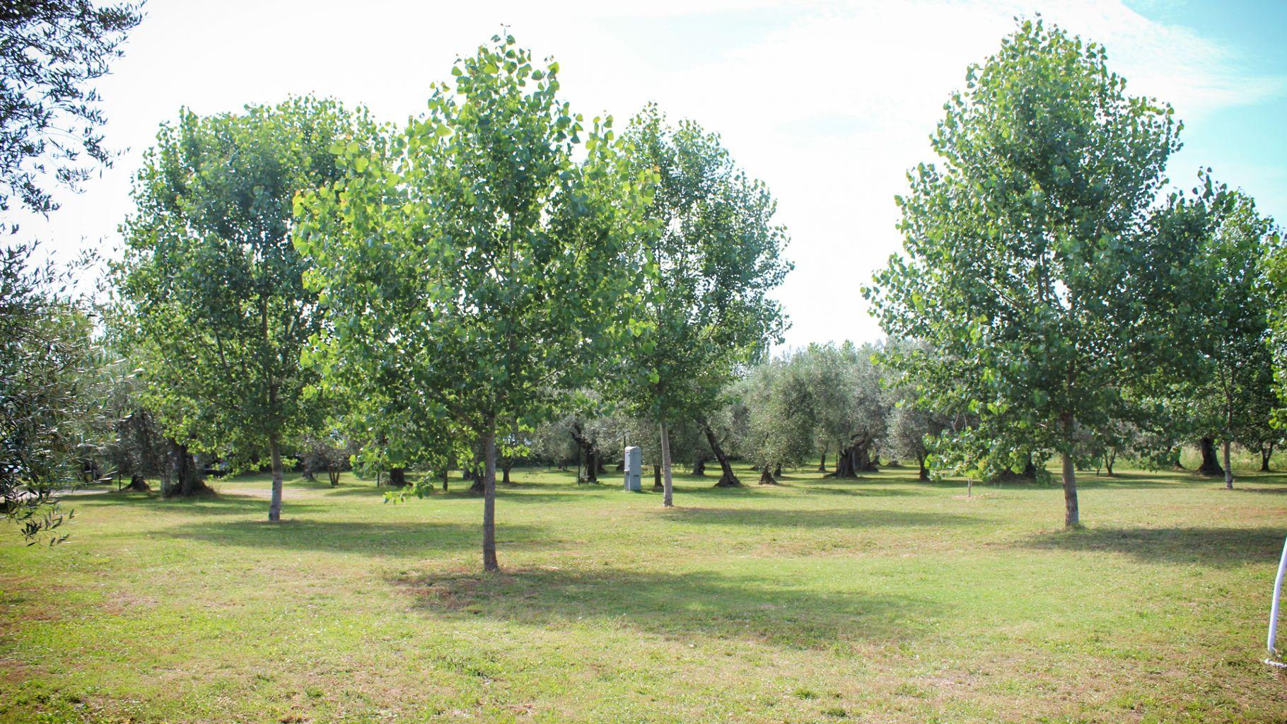 Location: Agricamping Monterotondo