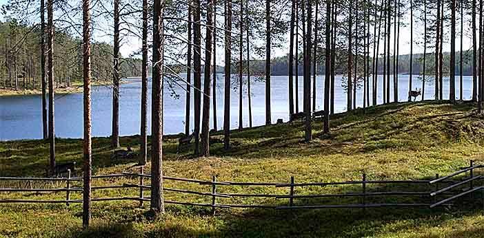 Location: Kylmäluoma
